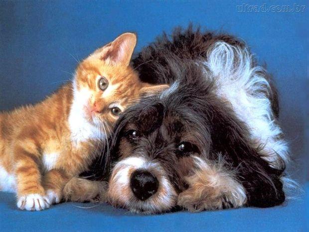 -Cachorro-e-Gato amados